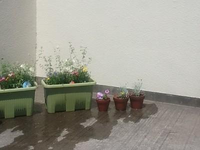 第1回 花の寄せ植えをしました