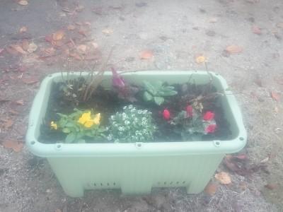 第2回 🌷花の寄せ植えをしました🌷