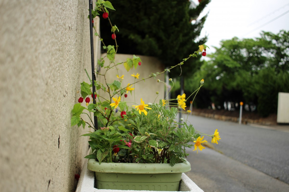 🌷第一回 校門前 花の寄せ植え🌷