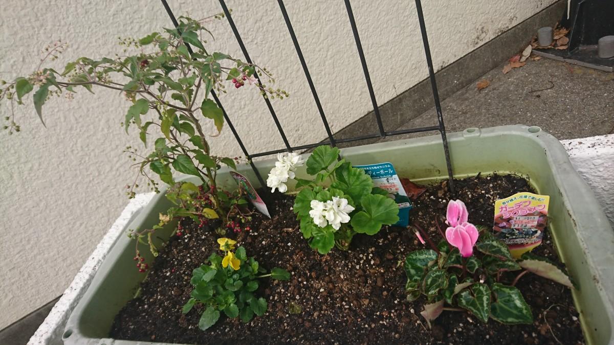 第2回 花の寄せ植え