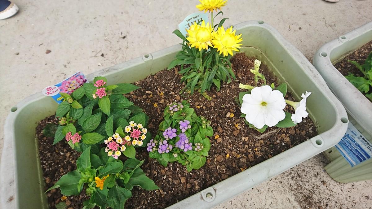 第1回 花の寄せ植え