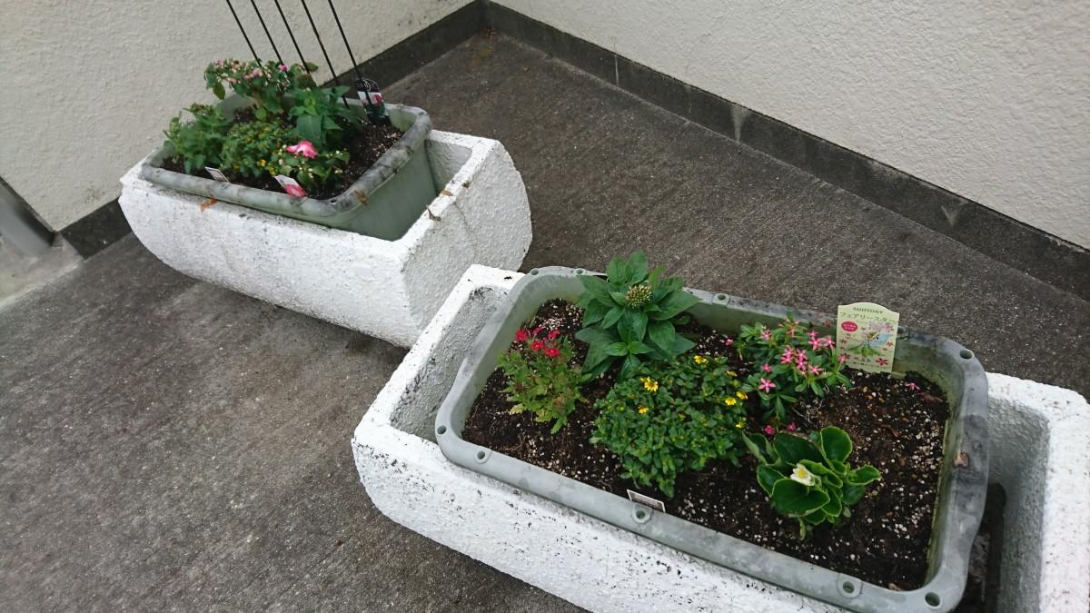 校門前の鉢植え